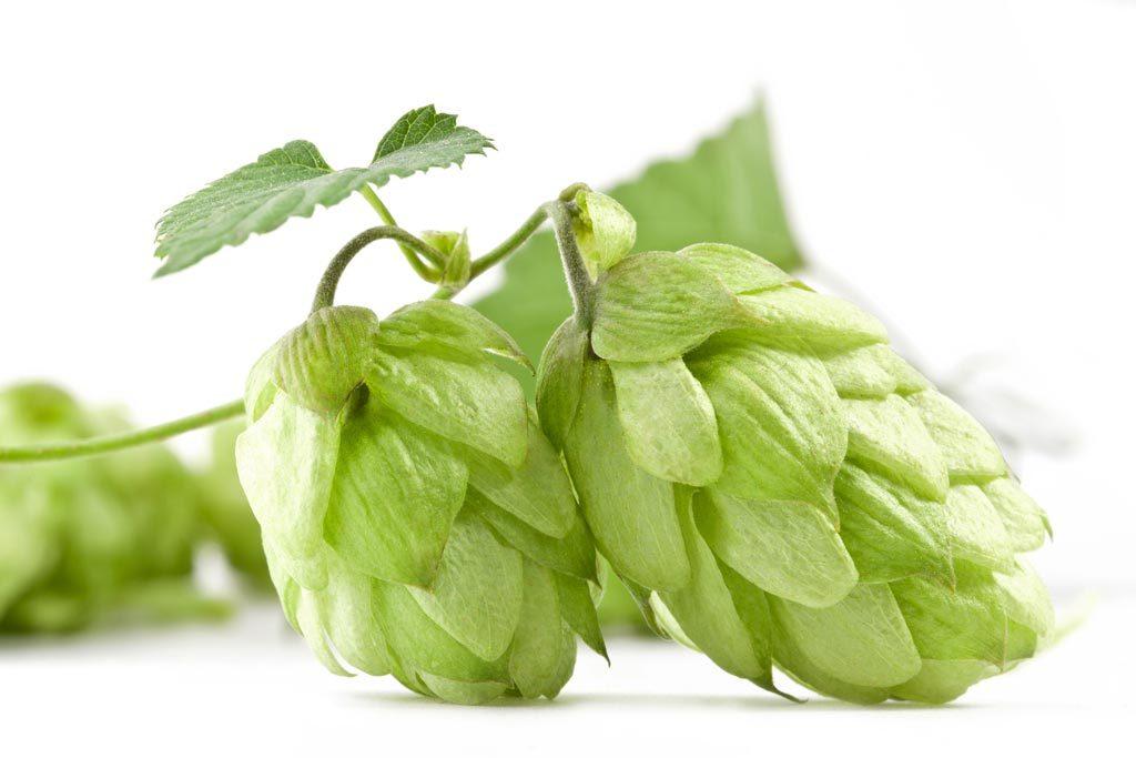 pivovari-pivovary-pivo-jako-ozdravny-napoj
