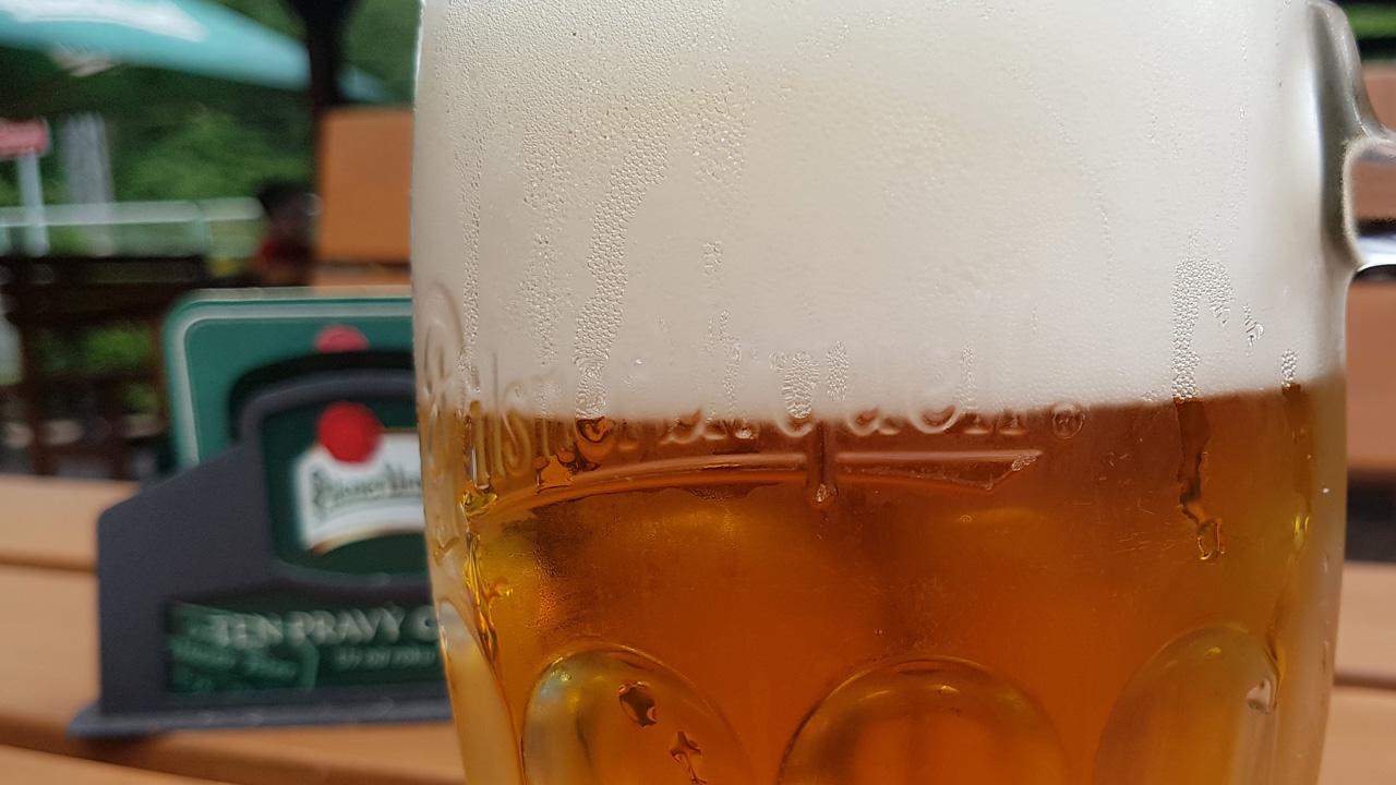 Plzeňské pivo máme díky náhodě. Jeho kvasinky vznikly před 500 lety, ukázal nový výzkum