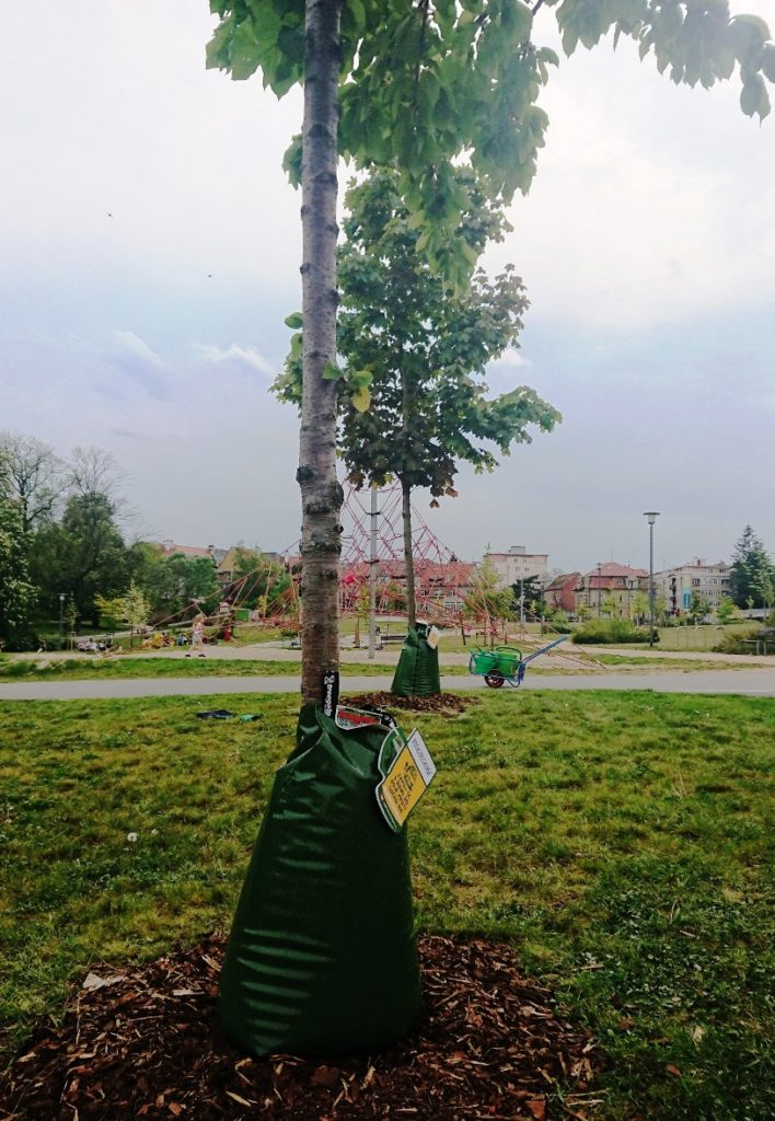 pivovari-pivovary-novinky-radegast-chrani-stromy-pred-suchem