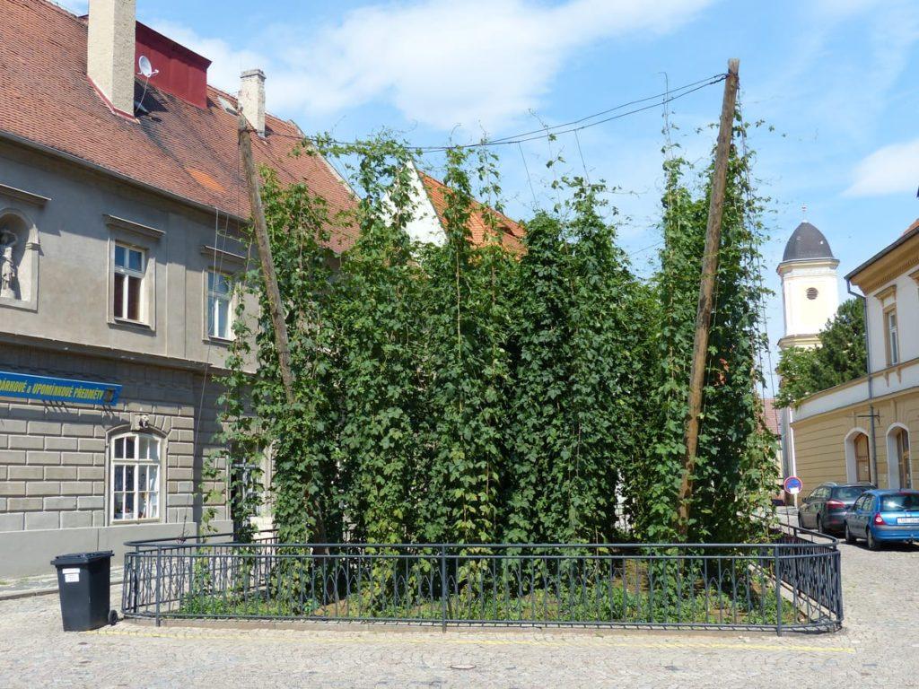 pivovari-pivovary-co-je-zatecka-dratenka-a-jak-chutna-mistni-pivo-zjistite-v-chmelarskem-muzeu_04